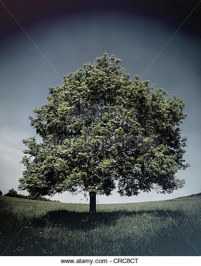 Feld dunkler Himmel Baum Stockbild