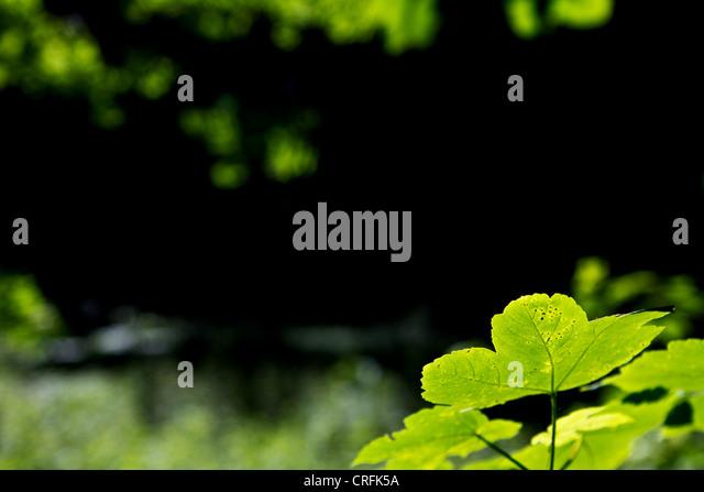 grüne Blätter im Vordergrund mit unscharfen, dunklen Hintergrund Stockbild