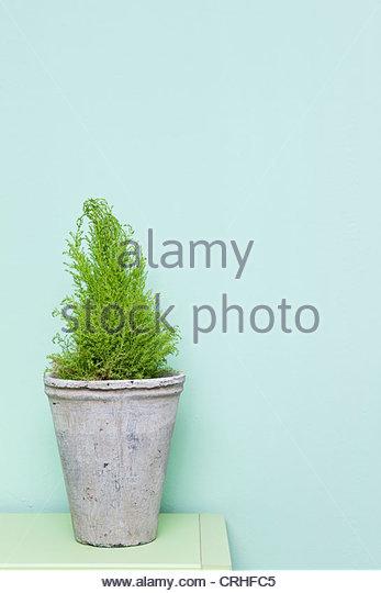 Vase Stockbild