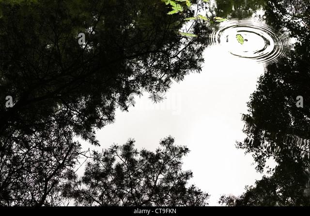 Wellen aus einem Regentropfen trifft das Wasser stören ein perfektes Spiegelbild auf einem Teich auf dem Allen Stockbild