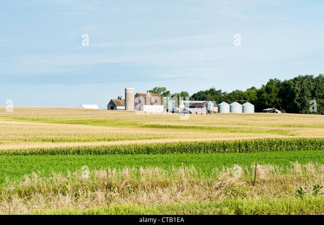 Landwirtschaftliche Gebäude werden mit einem Maisfeld im Vordergrund angezeigt. Stockbild