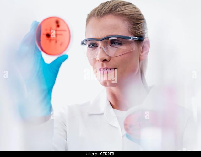 Mikrobiologe untersuchen Kulturen Stockbild