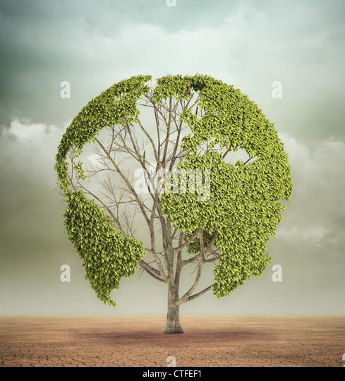 Ein einsamer Baum mit der Weltkarte in der Wüste Stockbild