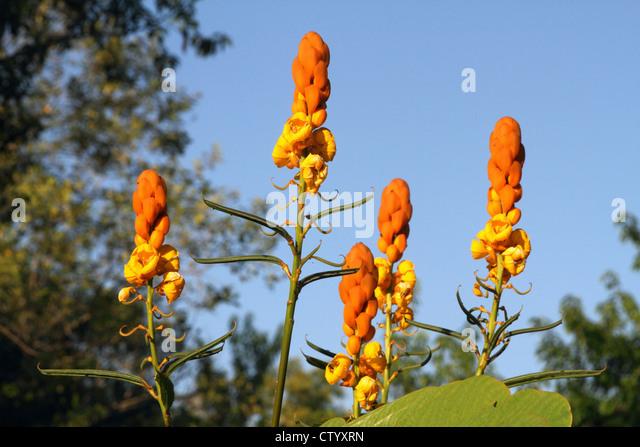 Nahaufnahme von exotischen orange Blumen Stockbild