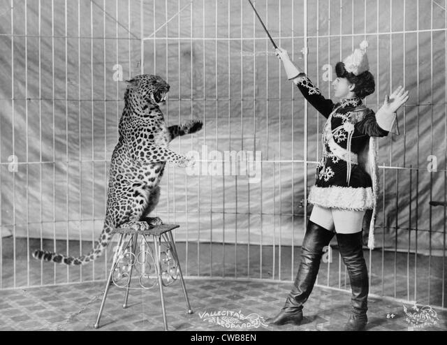 Vallecita des Leoparden. Weibliche Tiertrainer und Leopard, 1900-1910 Stockbild