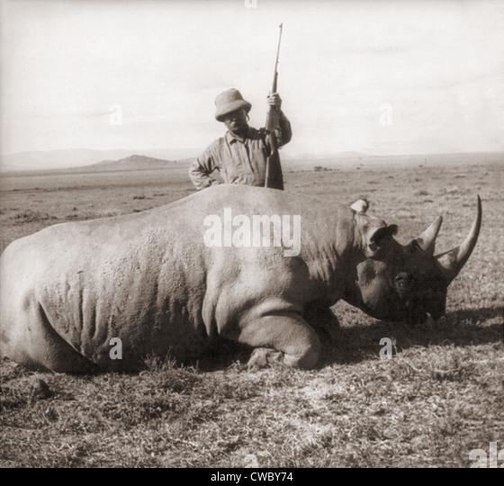 Ehemaliger Präsident Theodore Roosevelt in Afrika hinter dem Toten Rhino und hält Gewehr ca. 1909. Stockbild