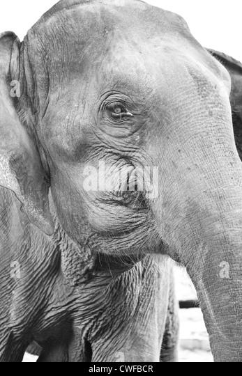 Chiang Mai-Elefanten Stockbild