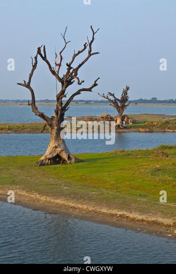 Tote Bäume am Ufer des Taungthaman See - AMARAPURA, MYANMAR Stockbild