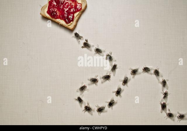 fliegen, Toast, unappetitlich Stockbild