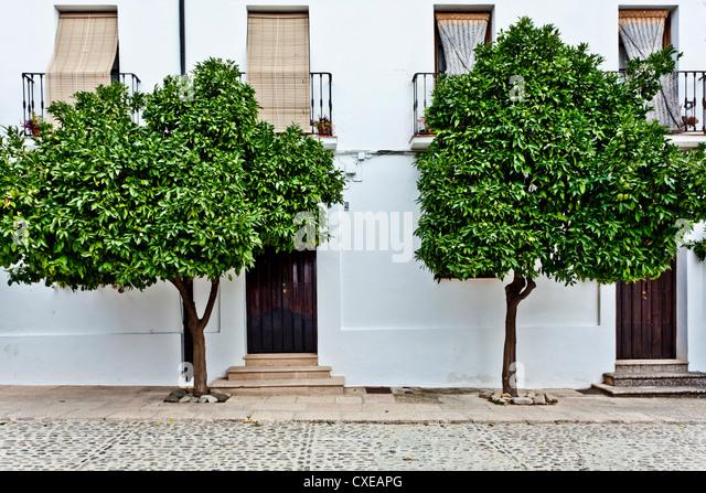 Orangenbäume in Ronda Straße, Ronda, Andalusien, Spanien, Europa Stockbild