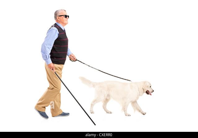 In voller Länge Portrait von einem blinden Mann mit Spazierstock und seinem Hund isoliert auf weißem Hintergrund Stockbild