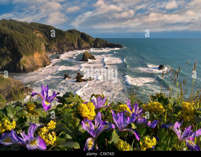Wild Iris und Mahonie wächst auf Klippe Samuel H. Boardman State Scenic Korridor. Oregon - Stock-Bilder