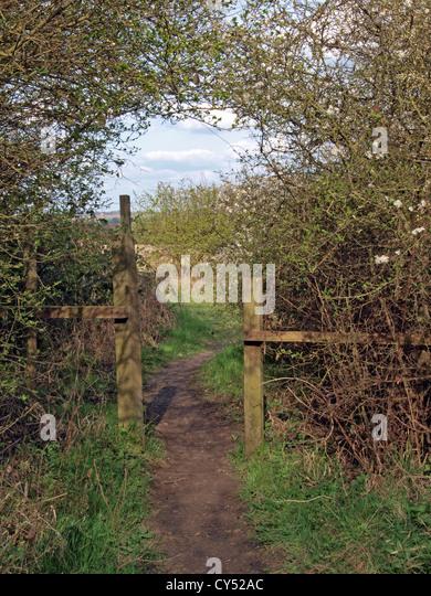 Kleiner Eingang in einen Wald in England. Stockbild