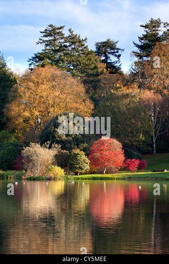 Herbstfarben auf dem Gelände des Mount Stewart, Nordirland. Stockbild
