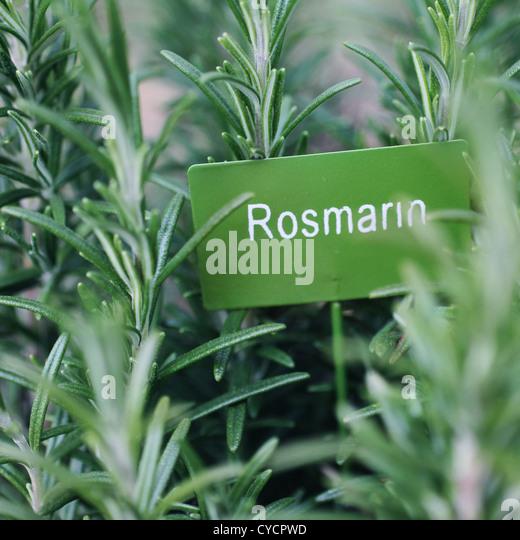 Rosmarin, Kräuter, Kräutergarten Stockbild