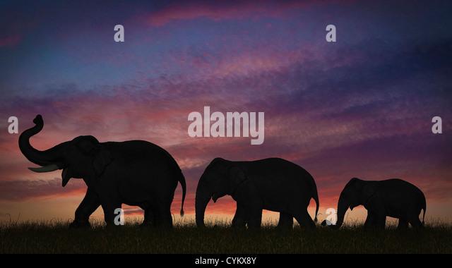 Silhouette des Elefanten gegen Himmel Stockbild