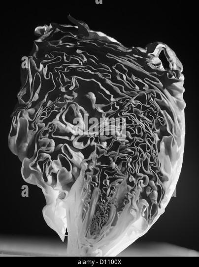 Detail der aufrechte Kopfsalat Stockbild