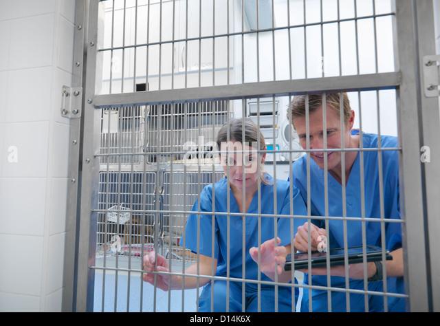 Tierärzte, spähte durch Käfigtür Stockbild