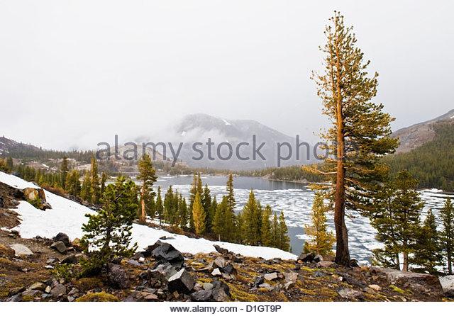 Berge und Bäume im Winter Zeit, Yosemite-Nationalpark, Yosemite, Kalifornien, Vereinigte Staaten von Amerika, Stockbild