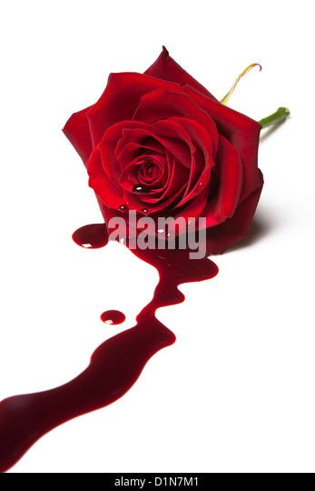 Rote rose mit Blut aus seinem Herzen Stockbild