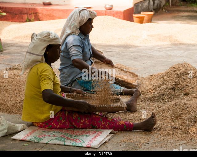 Zwei Frauen, die die Spreu - Methode, entwickelt von alten Kulturen zur Trennung von Spreu vom Korn Worfeln Stockbild