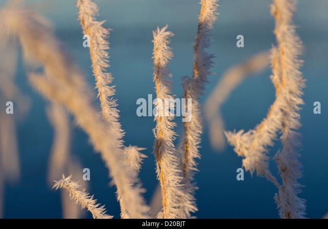Raureif auf Rasen Stockbild