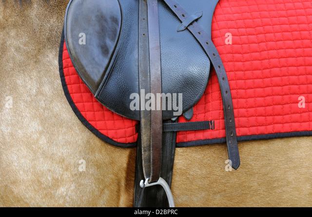 Nahaufnahme von einem Pferdegeschirr Stockbild
