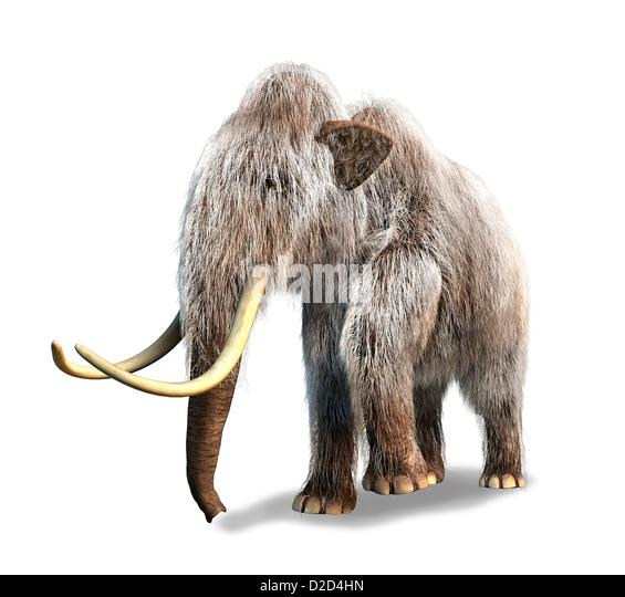 Wolliges Mammut Mammuthus Primigenius Computer Grafik Stockbild