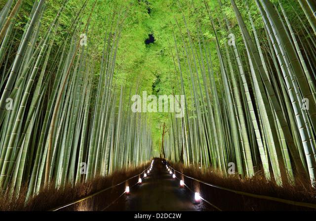 Der Bambuswald von Kyoto, Japan. Stockbild