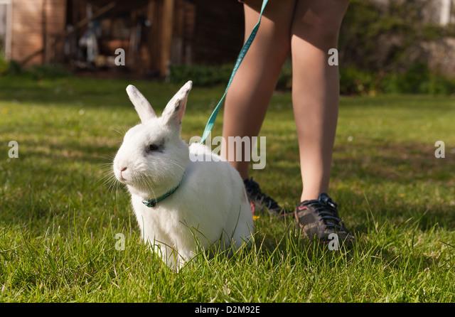 Teenager-Mädchen zu Fuß einen englischen Butterfly weiße Kaninchen an der Leine auf einer Wiese mit Stockbild