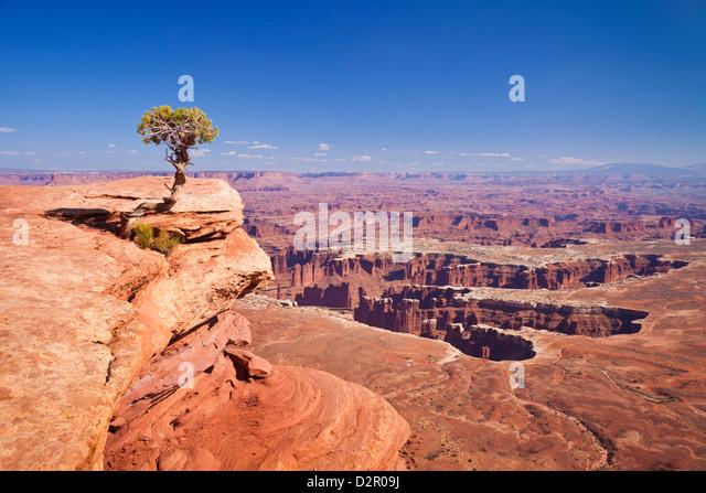 Grand View Point Overlook und Wacholder Baum, Insel im Himmel, Canyonlands National Park, Utah, USA Stockbild