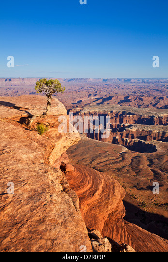 Grand View Point Overlook und Wacholder Baum, Insel im Himmel, Canyonlands National Park, Utah, USA Stockbild