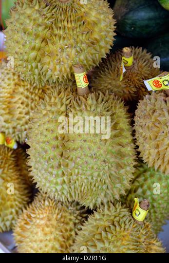 Die Durian Baum Früchte von mehreren Arten aus der Gattung Durio und der Familie Malvaceae, Myanmar Stockbild