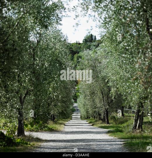 Bäumen gesäumten Feldweg in ländlichen Landschaft Stockbild