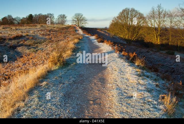 Frühe Frost erste Anzeichen des Winters auf der Cannock Chase Bereich der herausragende natürliche Schönheit Stockbild