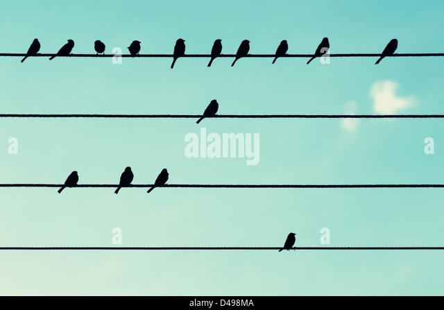 Vögel auf Stromkabel, wie Noten. Stockbild