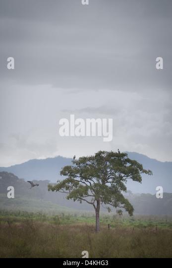 Nebligen Landschaft in der Nähe von Tonosi, Los Santos Provinz, Republik von Panama. Stockbild