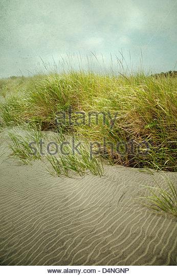 Stimmungsvolle Landschaft mit langen Gräsern und Sand am Strand mit stürmischen Himmel Stockbild