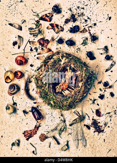 Pflanzen und Insekten um nest Stockbild