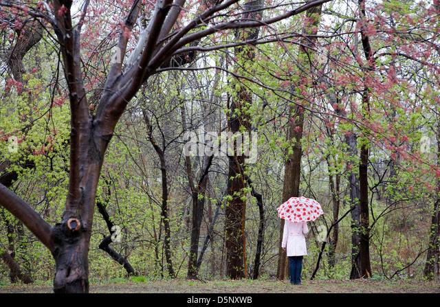 Frau mit Sonnenschirm in Frühlingslandschaft Stockbild