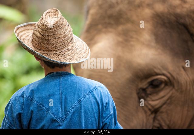 Vier Jahreszeiten-Elefanten-Camp, Nord-Thailand, Südostasien, Asien Stockbild
