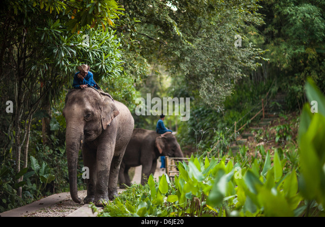 Vier Jahreszeiten-Elefanten-Camp, Goldenes Dreieck, Thailand, Südostasien, Asien Stockbild