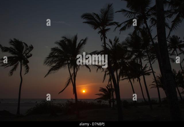 Ein Sonnenuntergang über das Arabische Meer, Arossim Beach, Goa, Südindien durch Palmen gesehen. Stockbild