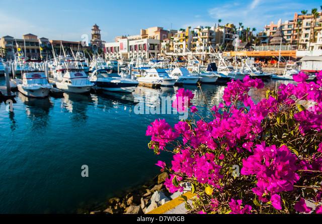 Bunte Blumen im Hafen von Los Cabos, Baja California, Mexiko Stockbild
