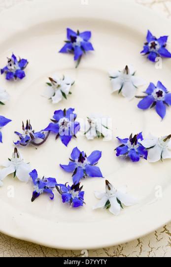 Blaue und weiße essbare Borretsch-Blüten auf einem weißen Teller. Stockbild