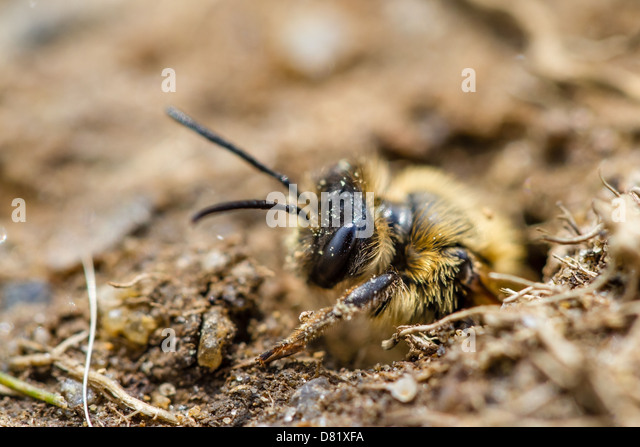 bee nest stockfotos bee nest bilder alamy. Black Bedroom Furniture Sets. Home Design Ideas