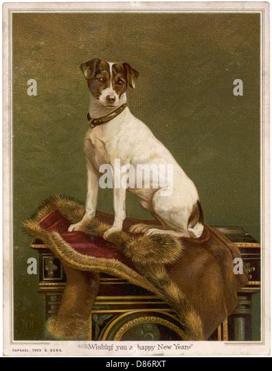 Vorgelegten Terrier Stockbild