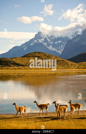 Torres del Paine Nationalpark, Chile Stockbild