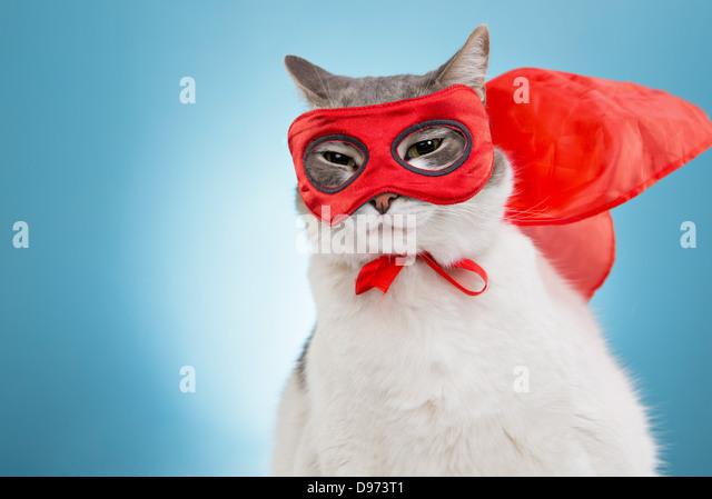 Katze im roten Umhang und Maske im Studio vor blauem Hintergrund geschmückt Stockbild