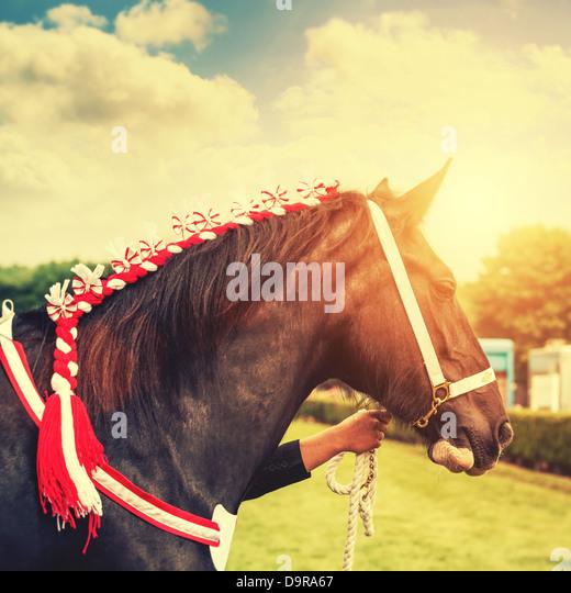 Pferde-show Stockbild